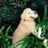 http://www.dirtydogsandmeow.com/resources/gallery/photo1588-1429069336552dde180618e7.98553402_915x600_v1.jpg