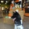 http://www.dirtydogsandmeow.com/resources/gallery/photo1704-14481637245651398c0e0ed1.13916688_915x600_v1.jpg